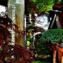 Kompozycja wystawowa drzew ikrzewów