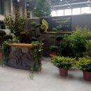 Wystawa drzew ikrzewów wKrakowie