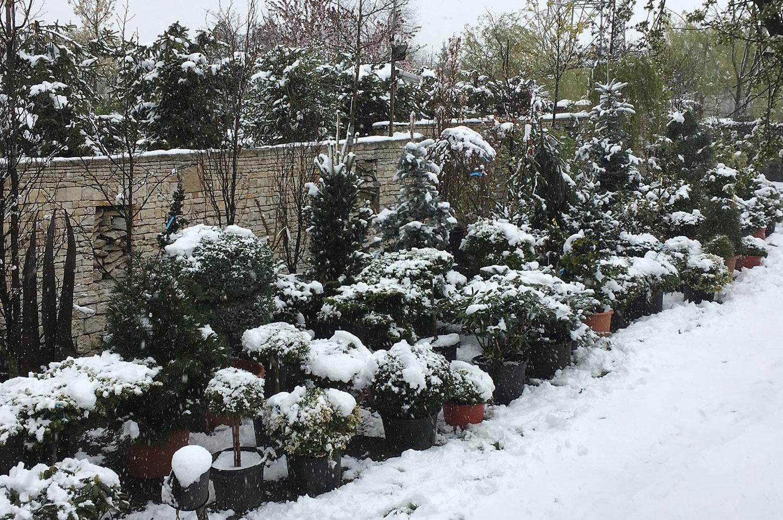 drzewa-i-krzewy-pod-wiosenn