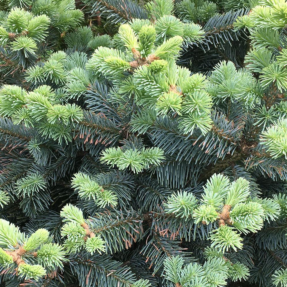 zimozielone-igl-oferta